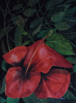 painting of sicilian_hibiscus_525_x_715