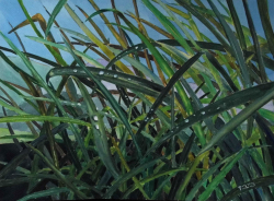 painting of 20_grasses_in_the_rain