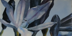 painting of agapanthus_ii