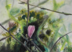 painting of magnolia_bud