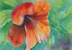 painting of sicilian_hibiscus_ii